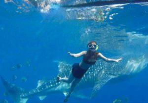 ジンベイザメとシュノーケリング