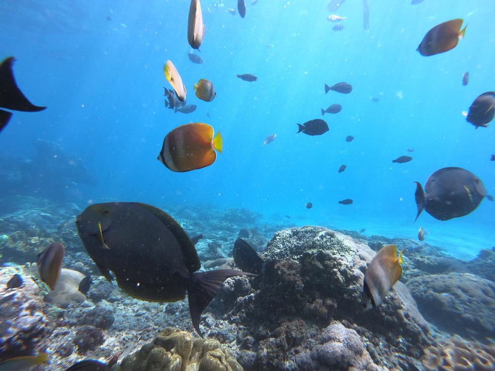 アイランドホッピング ヒルトゥガン島の透明度抜群の海洋保護区でシュノーケル満喫<日本語ガイド/GoProオプション>