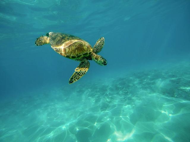 ジンベイザメと泳ぐ+モアルボアル(イワシトルネード/大サンゴ礁/ウミガメ)シュノーケル1日満喫ツアー