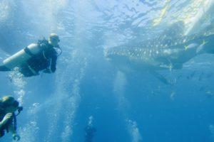 ジンベイザメとダイビング